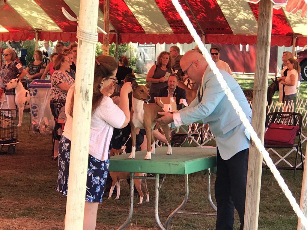 Western Waukesha Dog Training